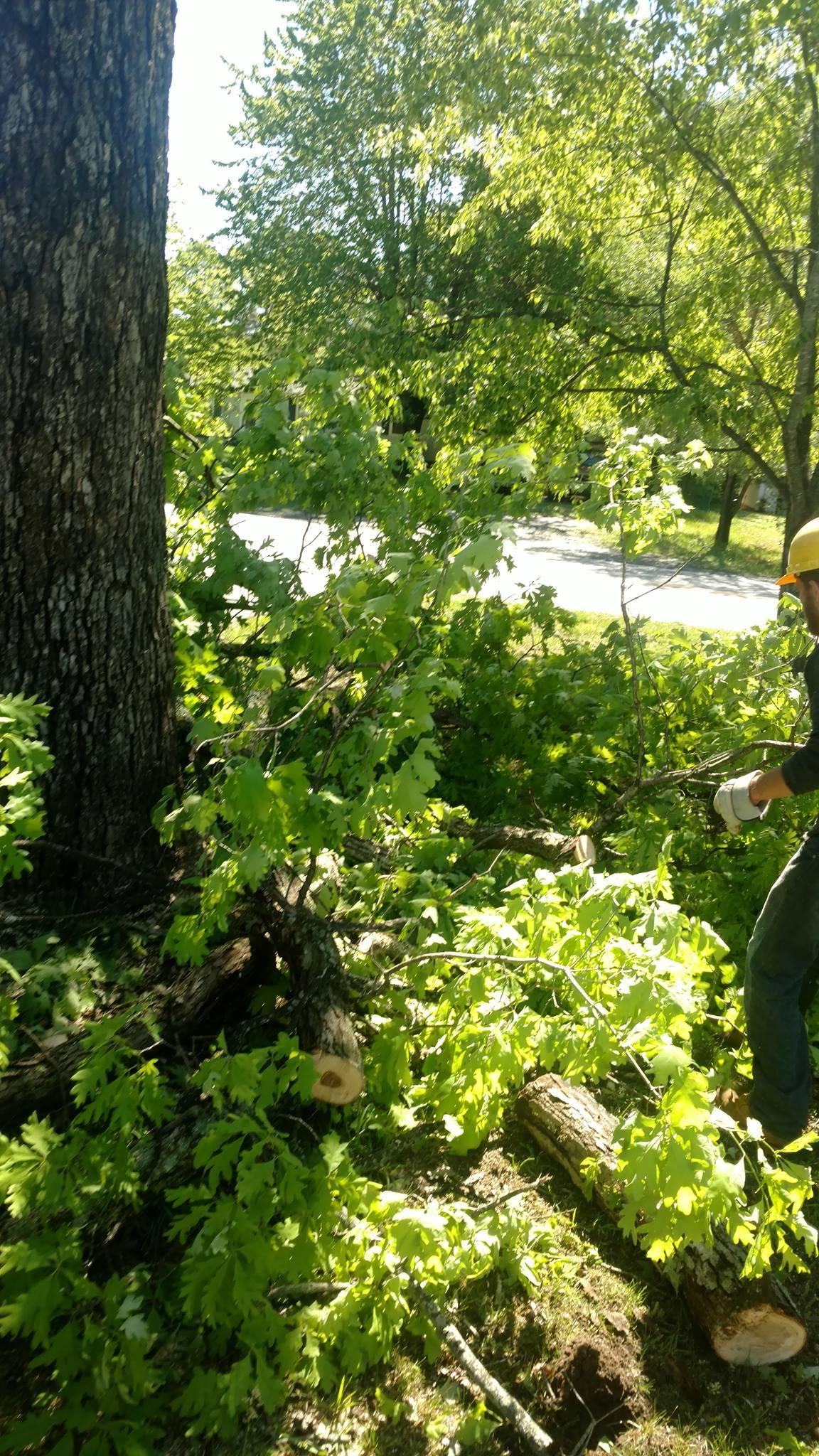 Lynchburg-tree-removal.