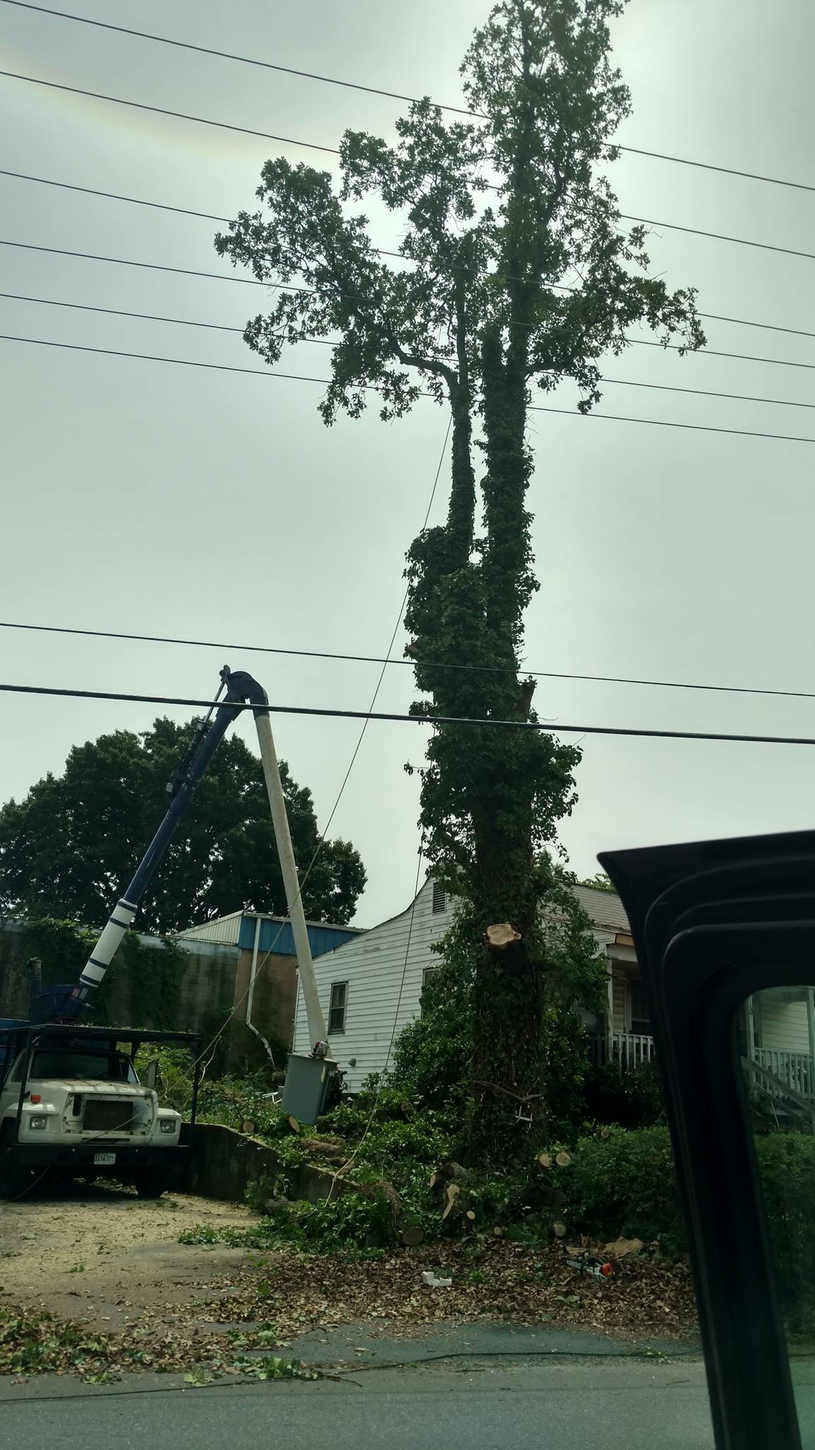 Lynchburg-tree-services-1