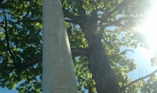 Lynchburg-VA-tree-removal