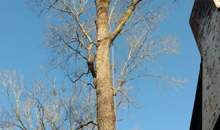 Lynchburg-Virginai-tree-service