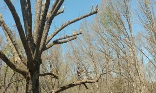 tree-removal-Lynchburg-VA-1
