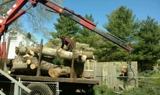 tree-removal-Lynchburg-VA