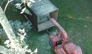 tree-removal-Lynchburg