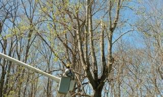 tree-services-Lynchburg-VA-1