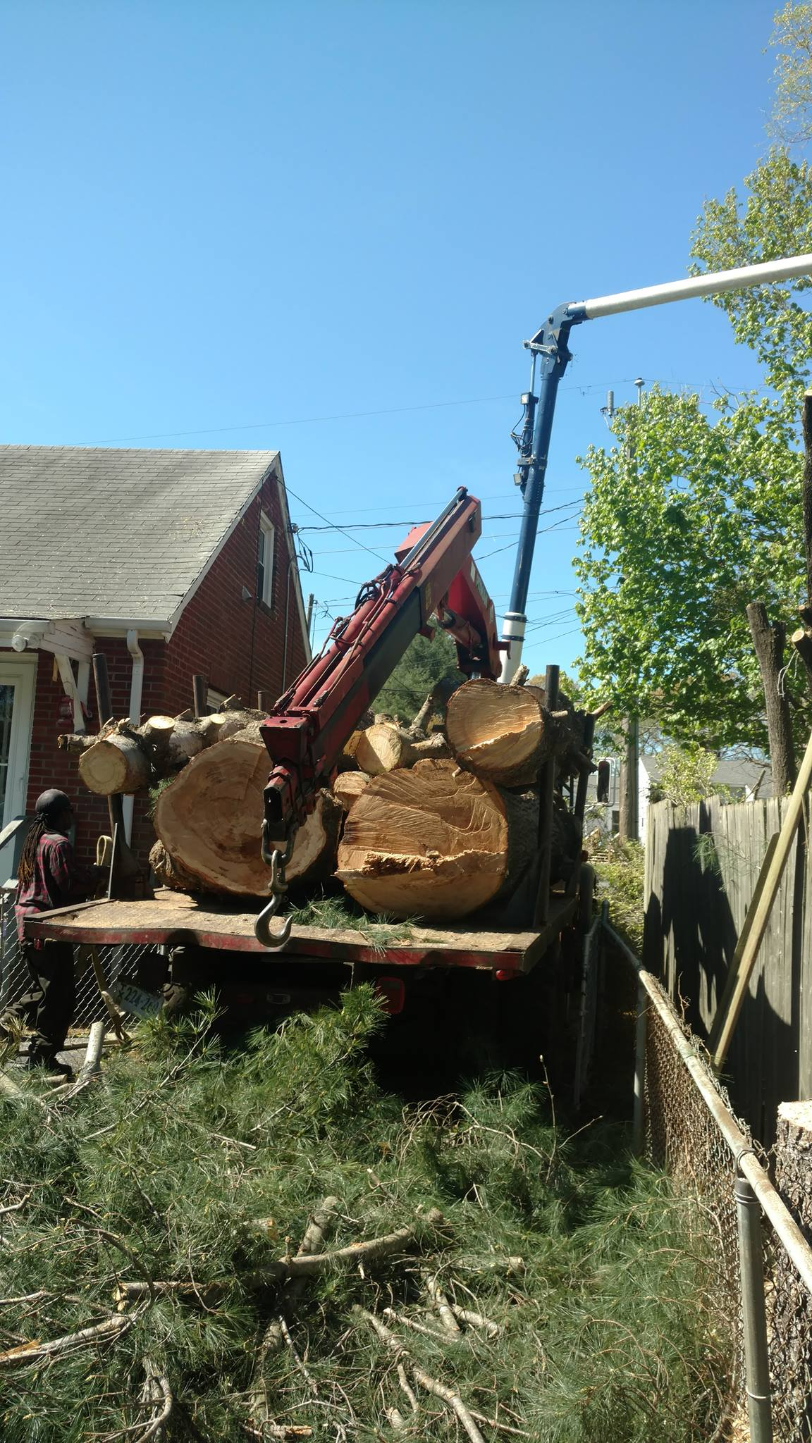tree-removal-Lynchburg-1