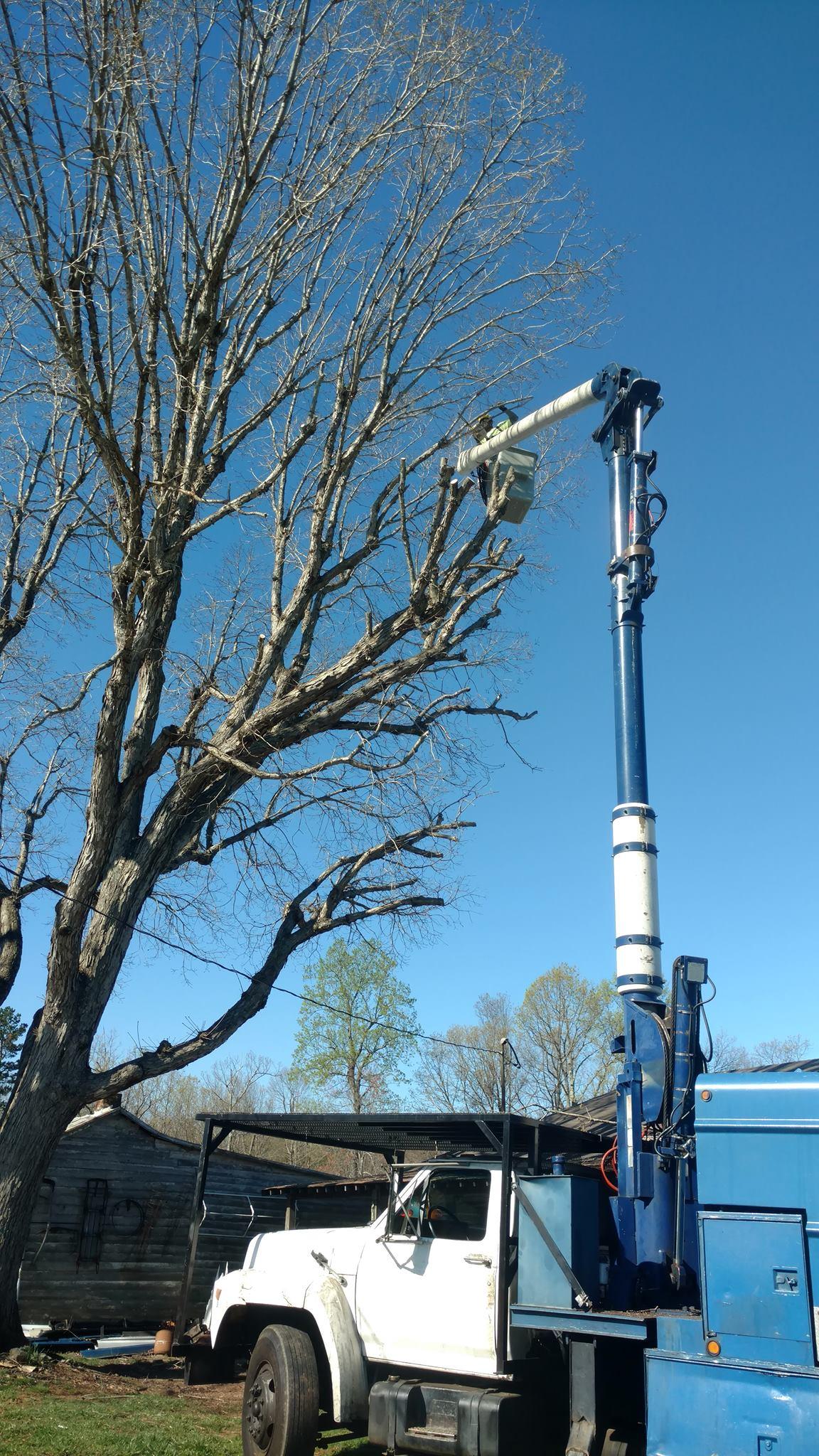 tree-service-Lynchburg-VA-1