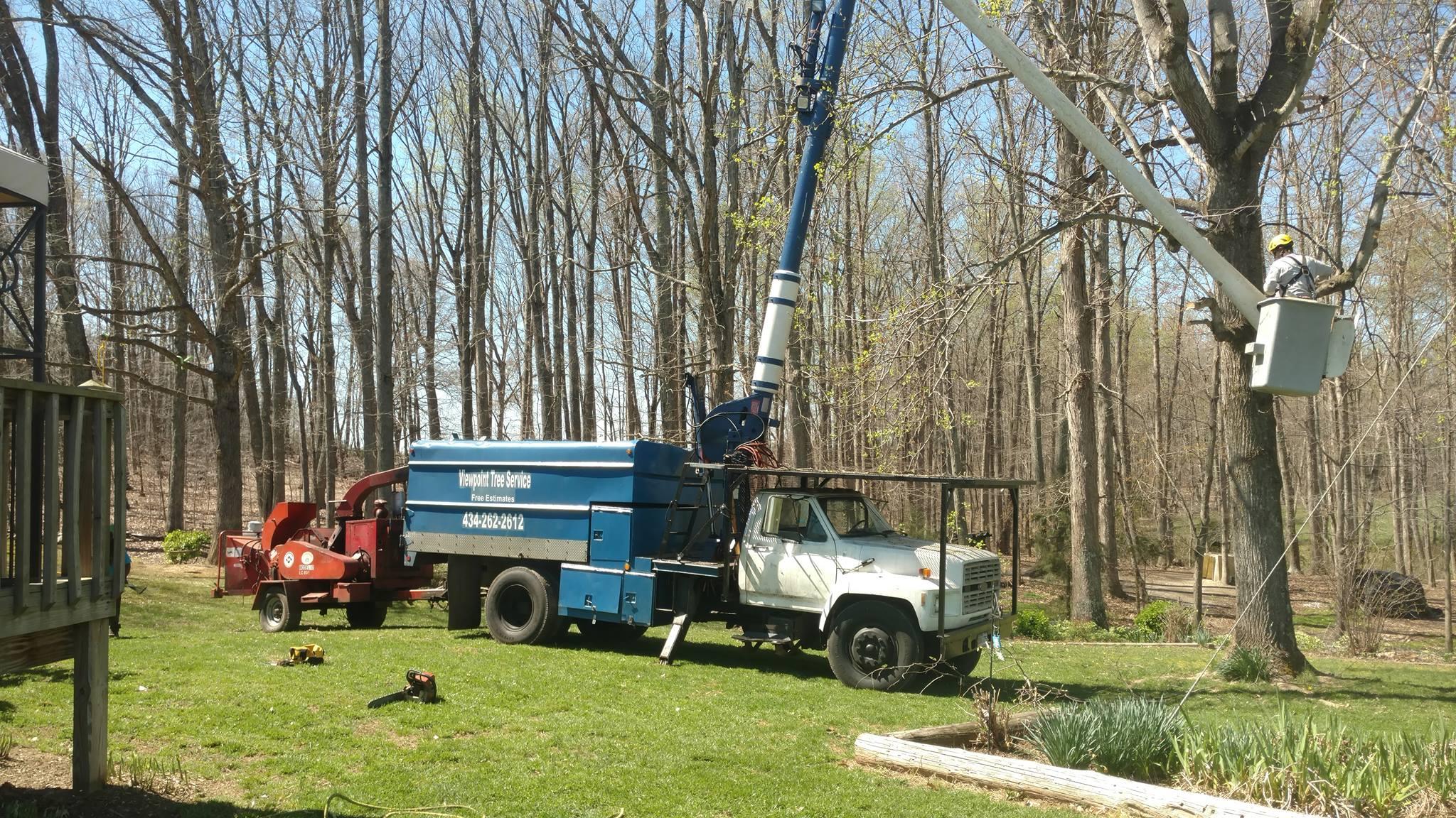 tree-service-Lynchburg
