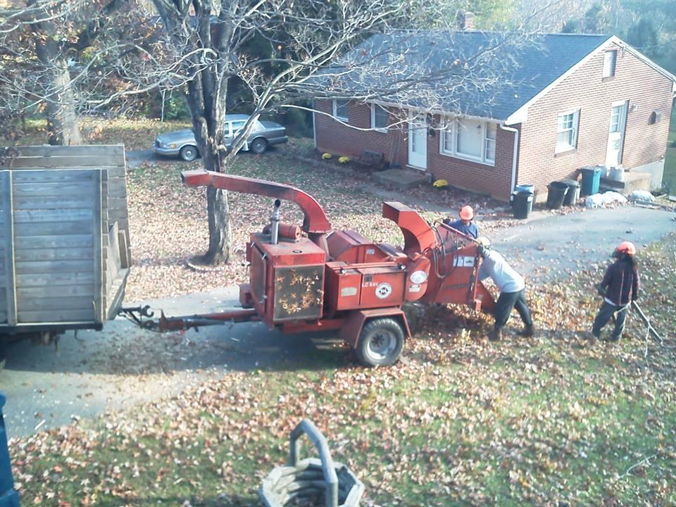 tree-service-companies-Lynchburg