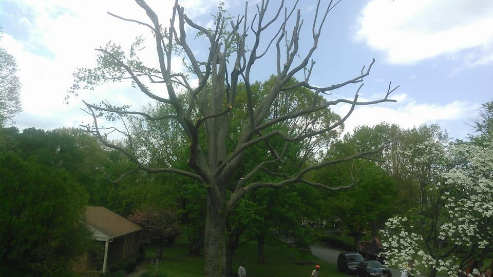 tree-services-Lynchburg-VA