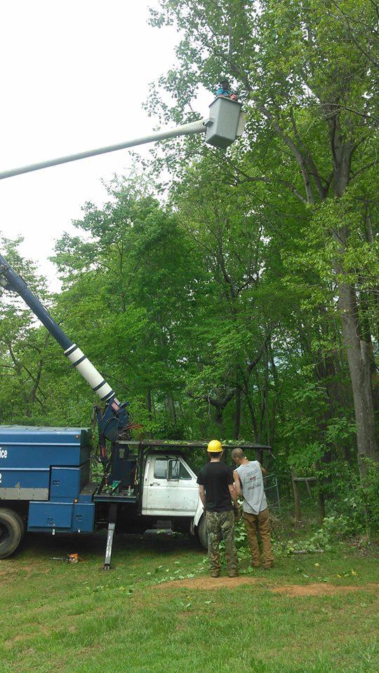 tree-topping-Lynchburg