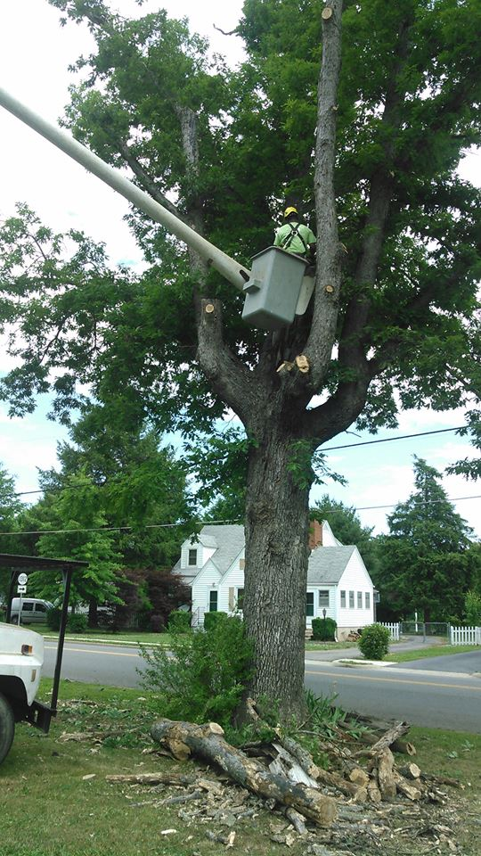 tree-trimming-Lynchburg