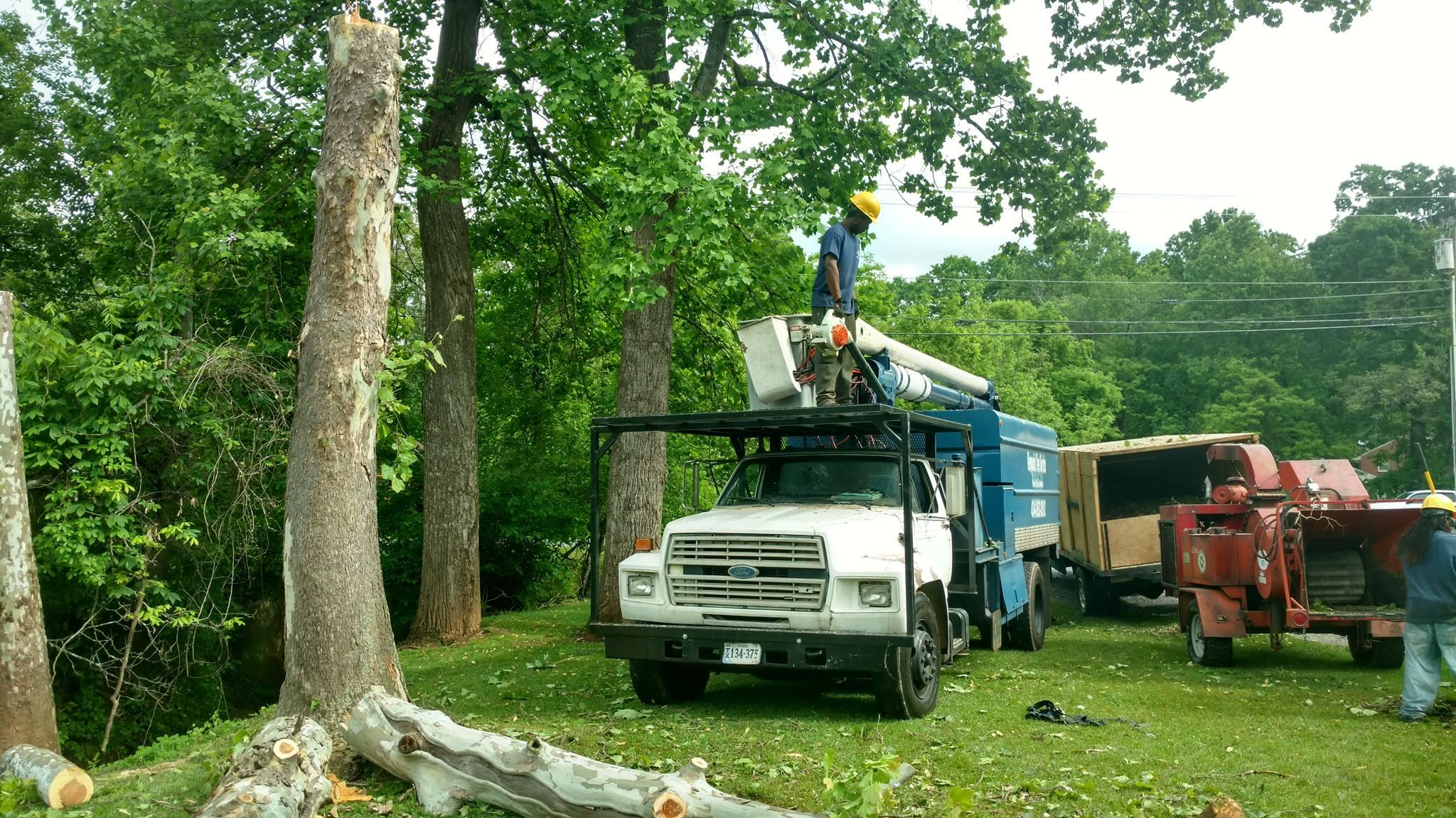 Lynchburg-tree-removal-service.