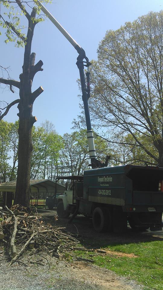 Lynchburg-tree-removal