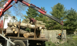 Lynchburg-VA-tree-service