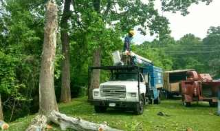 Lynchburg-tree-removal-service.