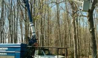 Lynchburg-tree-service-1