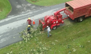 Lynchburg-tree-service-2