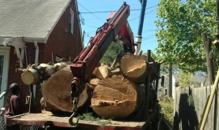 tree-removal-Lynchburg-1