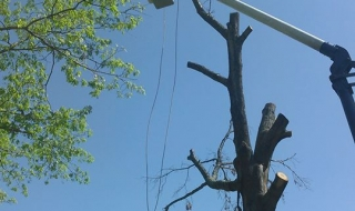 tree-service-Lynchburg-VA