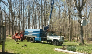 tree-service-Lynchburg