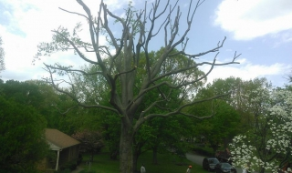 tree-services-Lynchburg-VA