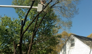 tree-services-Lynchburg