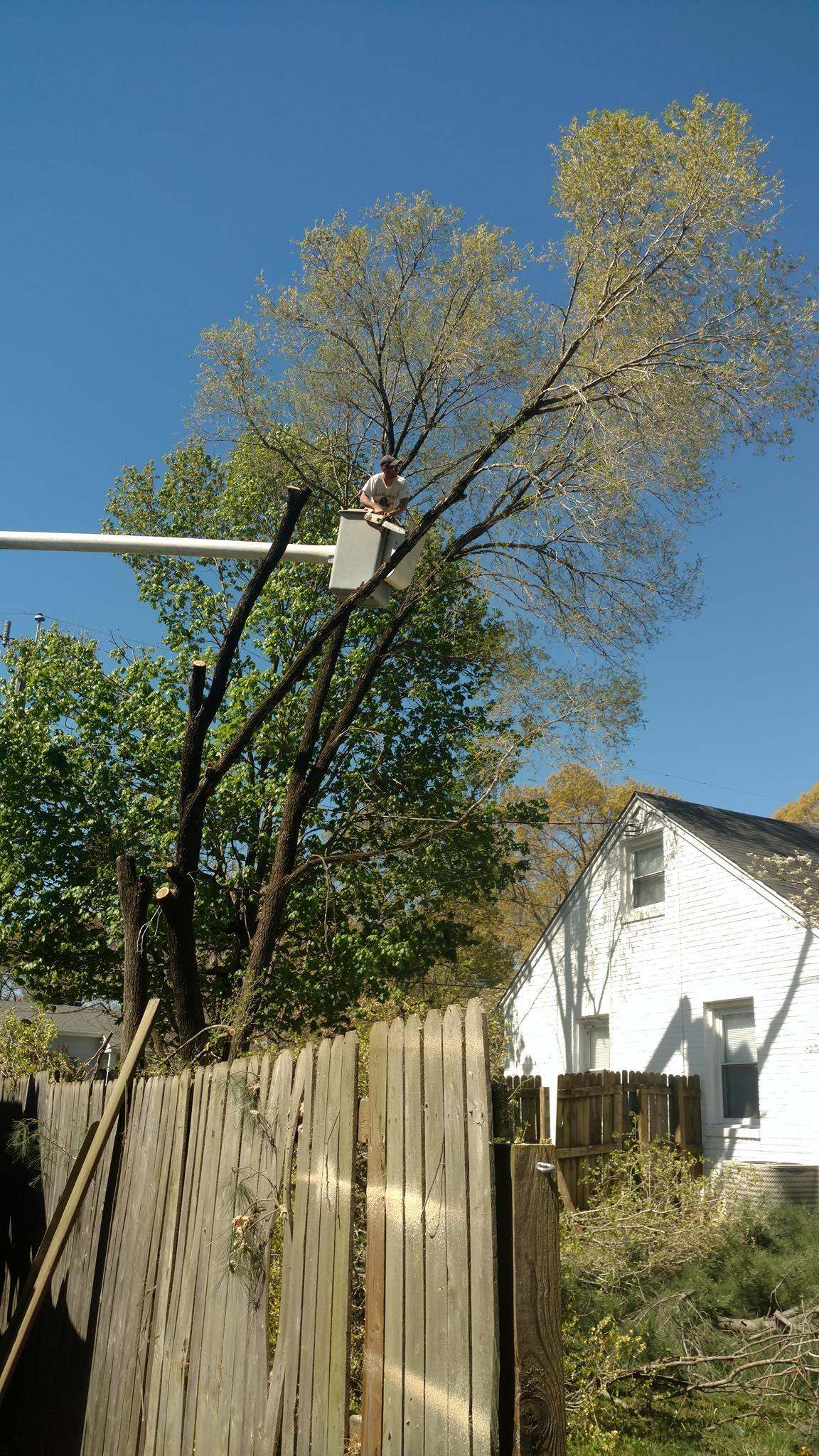 tree-services-Lynchburg